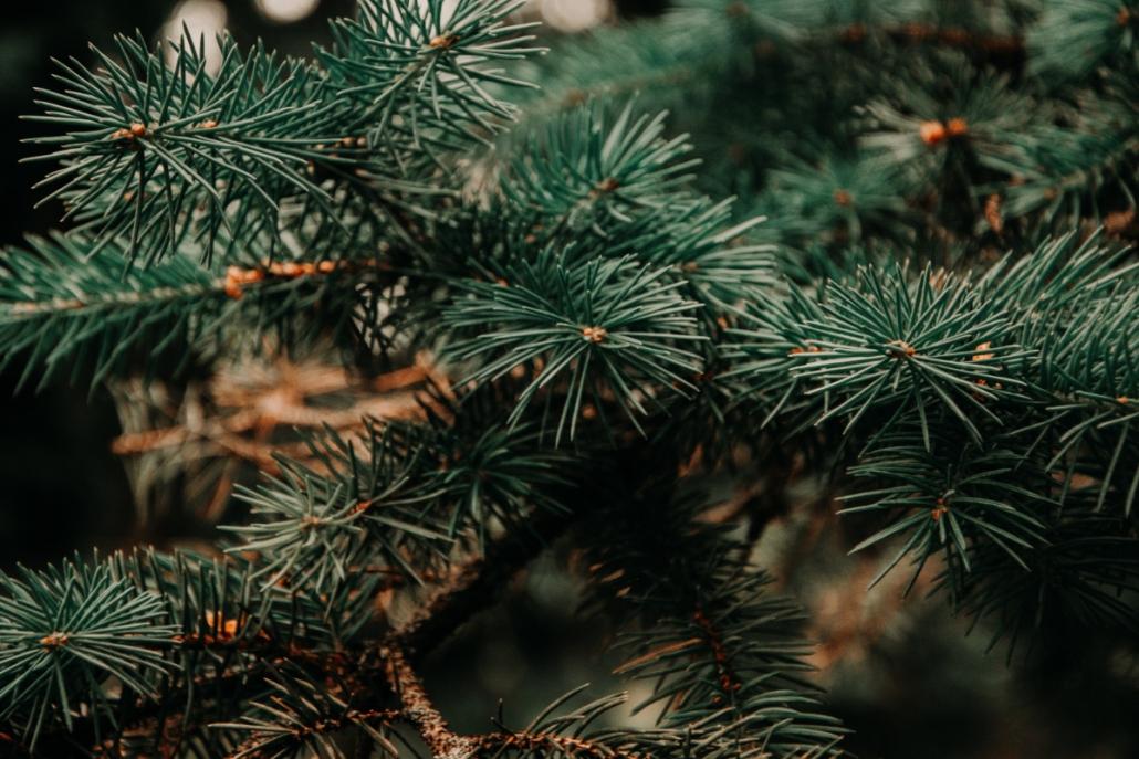 Zero_waste_Weihnachtsbaum